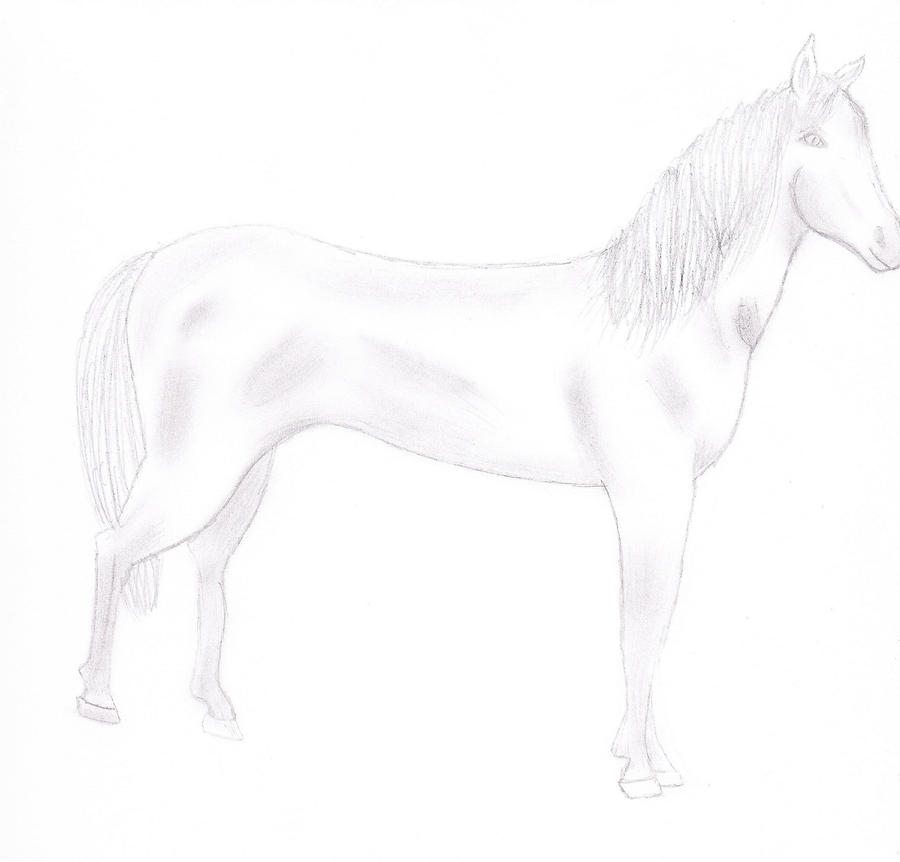 Horse Sketch by TheRebelWithNoCause