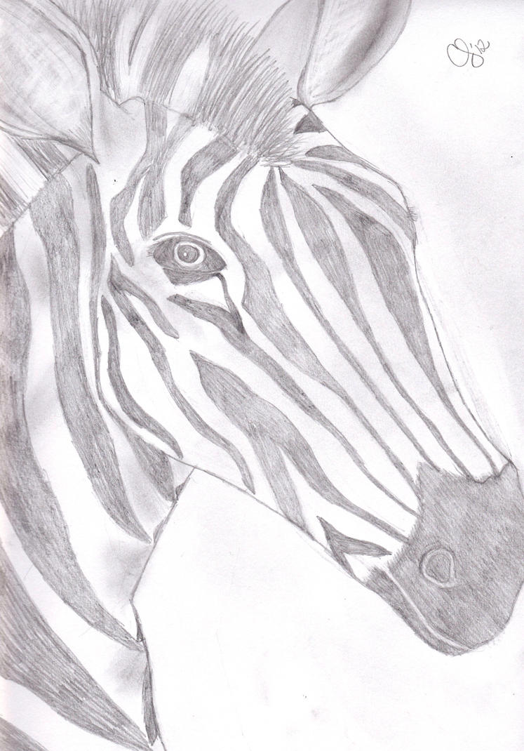 Zebra Sketch by TheRebelWithNoCause