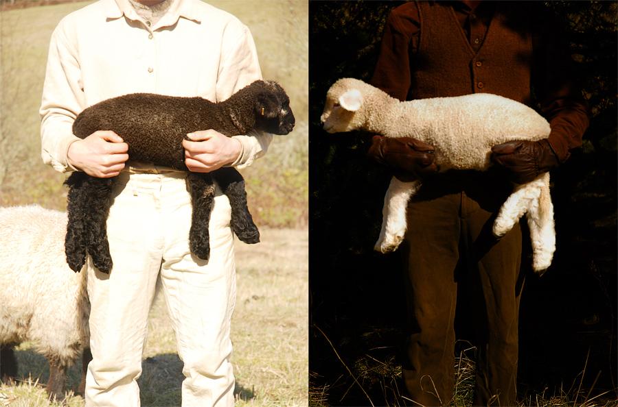 lambs by fahrmboy