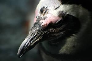 Beak it..