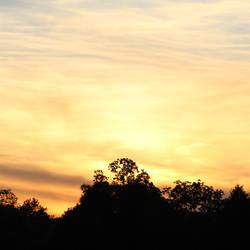 Sunset Question Mark Tree