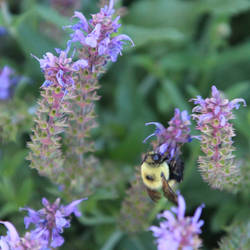 Bee Options