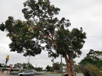 Tree by GlaciesArdeat