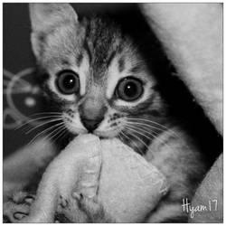 yummy blanket