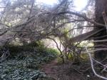 Welcome to Wonderland 2 (Tulgey Woods)