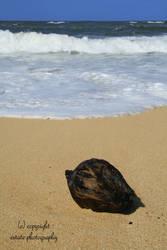 Hawaii 16