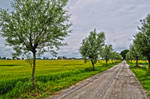 Road to summer HDR