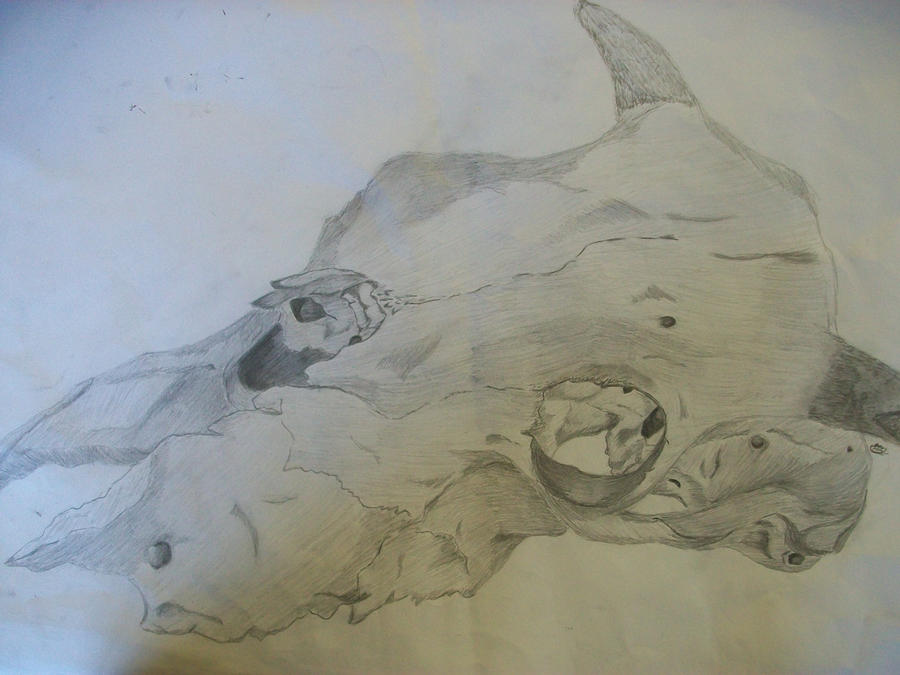 Anatomy: Animal Skull Sketch by Raaawr-artist on DeviantArt