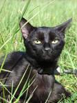 My Black cat .::CHERRY::. by Mamoru-sama