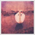 The swan called Victor Hugo