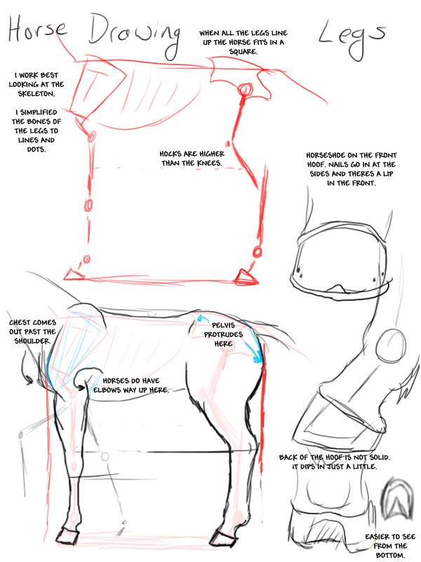 It's just a graphic of Witty Horse Legs Drawing