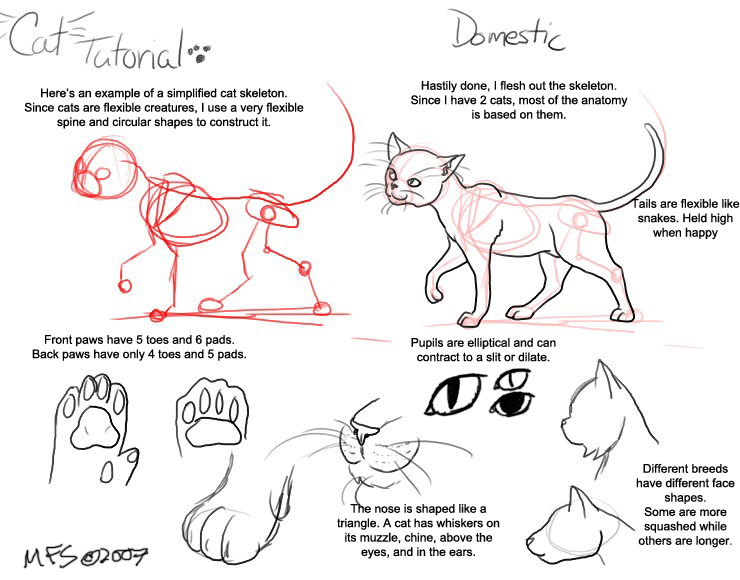Animal Anatomy Anatomy And Cat: Cat Tutorial: Domestic By Modesty On DeviantArt