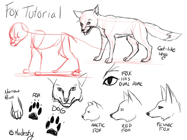 Tutorial Foxes By Modesty On Deviantart