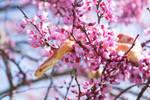 Cooper in flowers pt 4 by PinEyedGirl