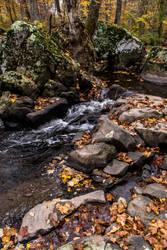 Autumn 8