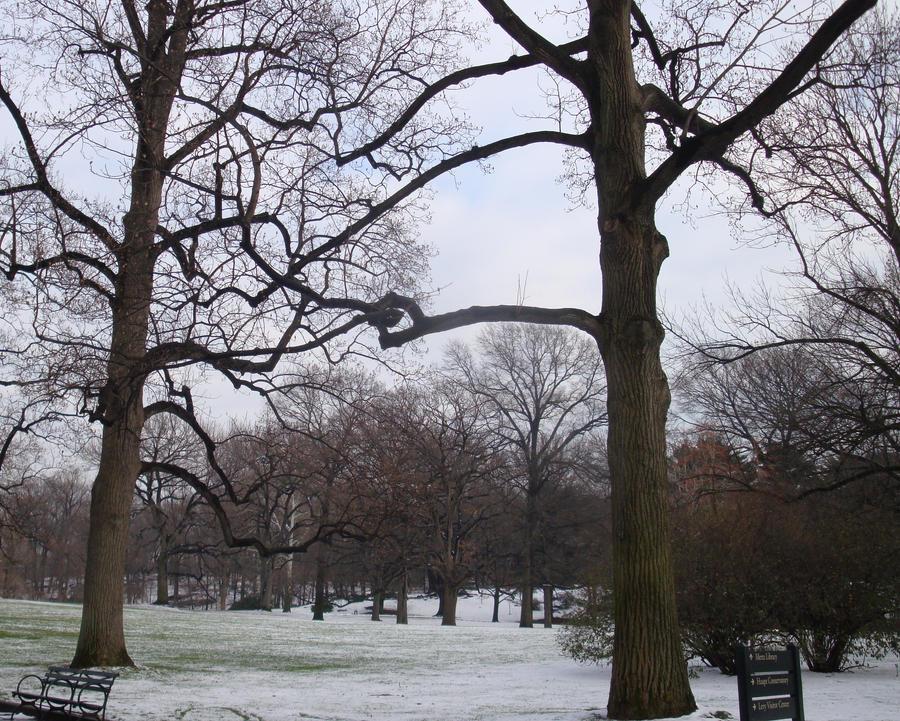Branch holding Branch... by wingsofdragons