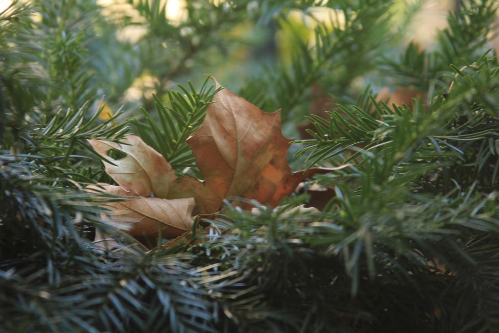 In My Tree by wingsofdragons