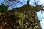 Lichen by Joannathellama