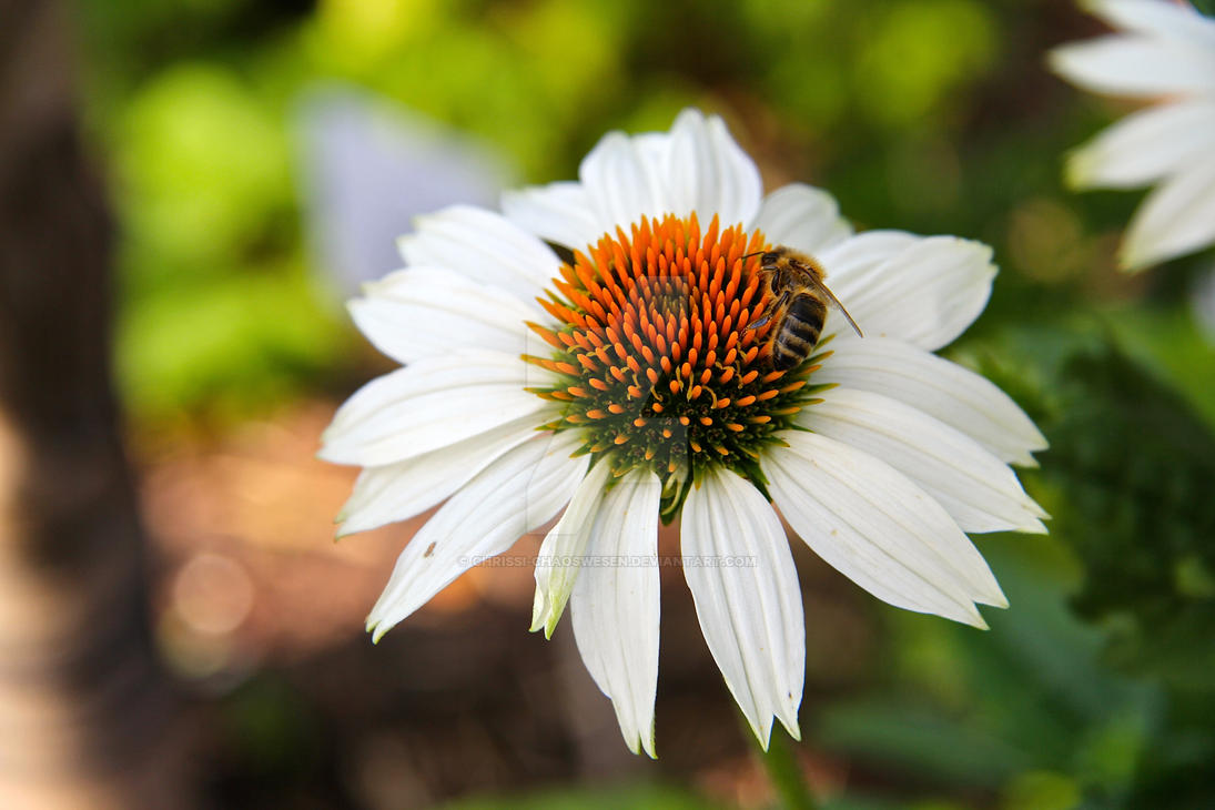 Busy bee 2 by Chrissi-Chaoswesen