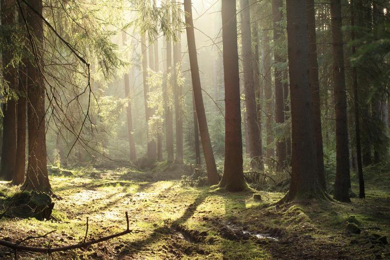 morninglight VII by indojo