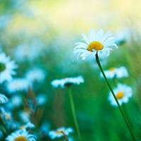 meadow X by indojo