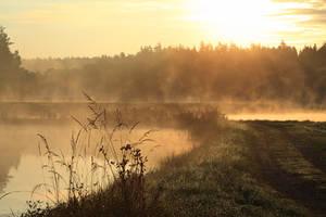 ponds by indojo