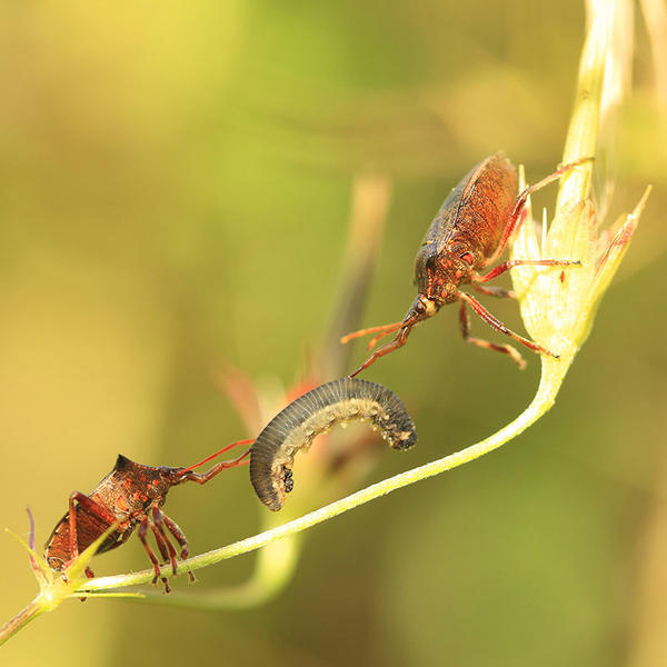 a bug with prey II by indojo