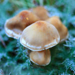 frozen mushrooms
