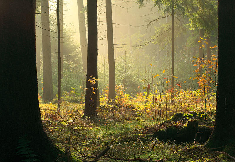 forest IV by indojo