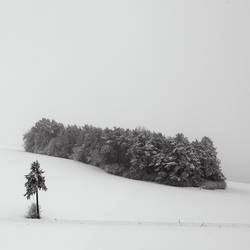 white cover by indojo