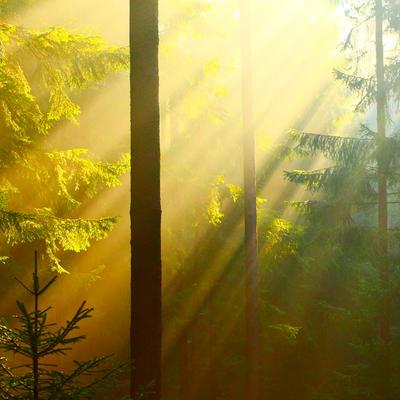 light x by indojo