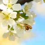 blossom diving IV by indojo