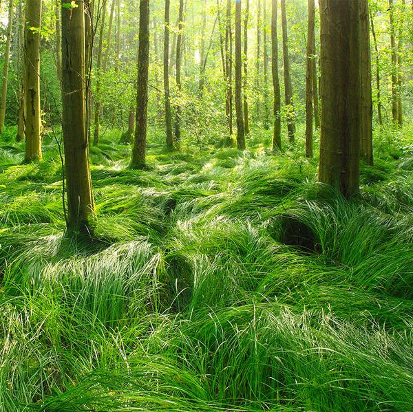 flowing green by indojo