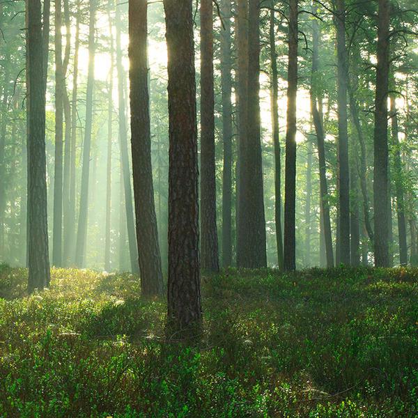 green morning III by indojo