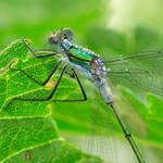 green beauty III