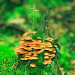 mushroomtower
