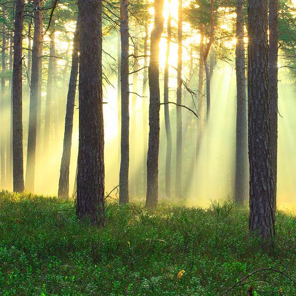 sunrise by indojo