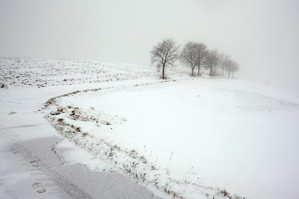 white II by indojo