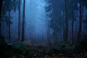 dark morning by indojo
