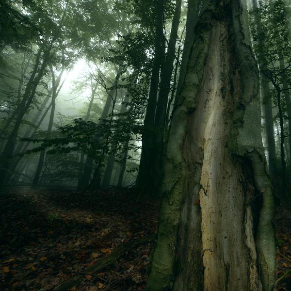 dark woods by indojo