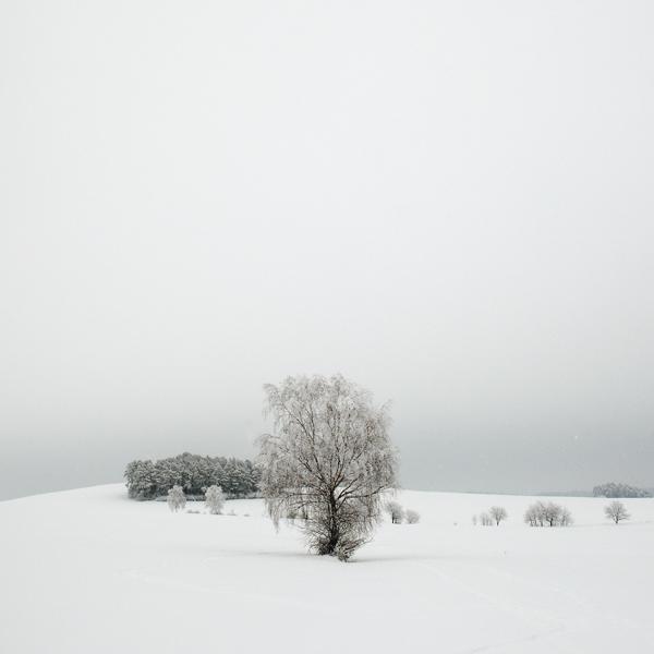 cold by indojo