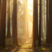 morninglight III by indojo