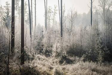 cold morning V by indojo