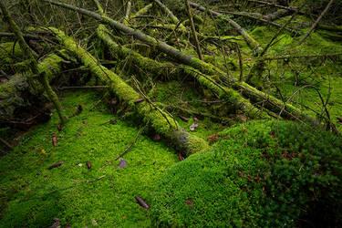 Green Carpet