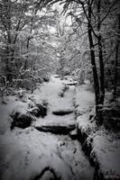 Bosque nevado... by yocar