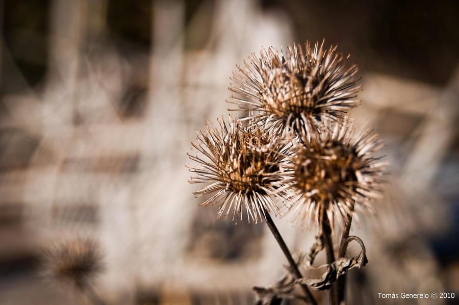 Fotógrafos de Crew (Exile) - Página 2 Dry_flowers_by_shuff_shuff-d35w3ij