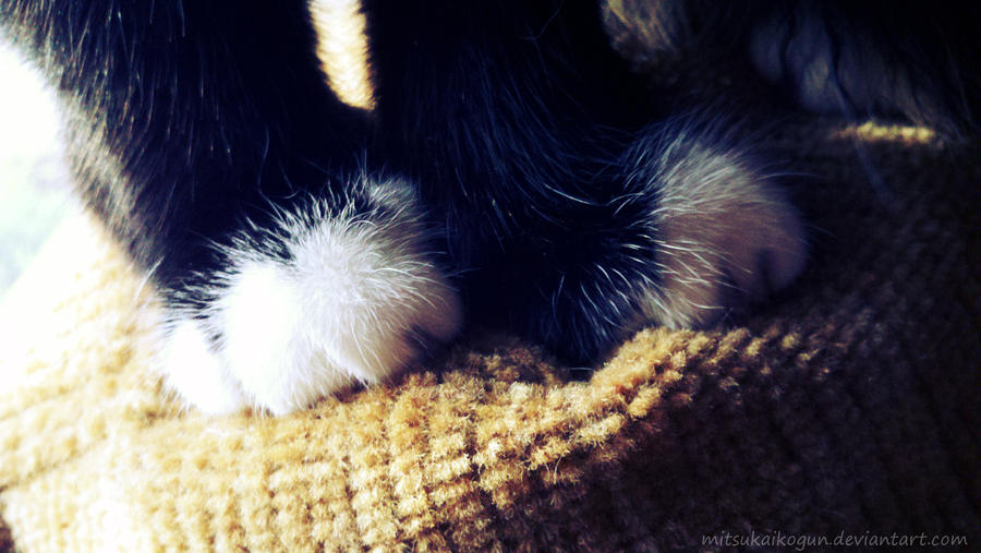 Paws by Smidow