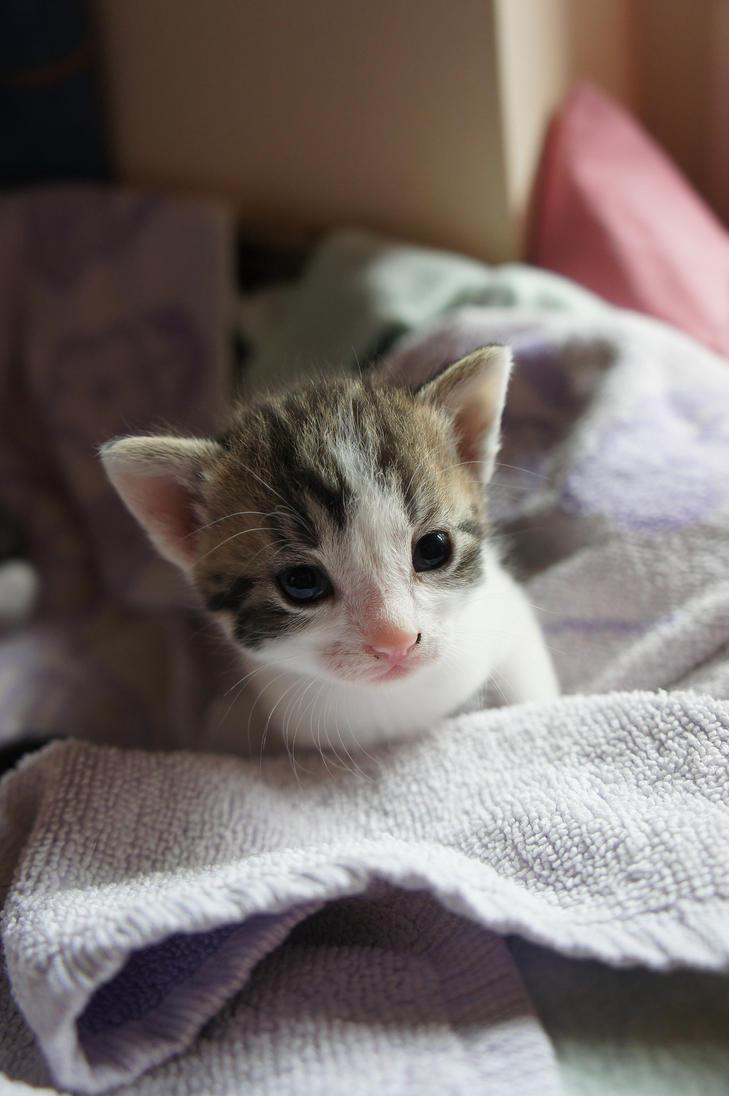 Kitten 60 by Aventurin89