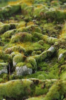 Mossy Gravestone {Texture}