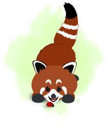 Red Panda Wonderment